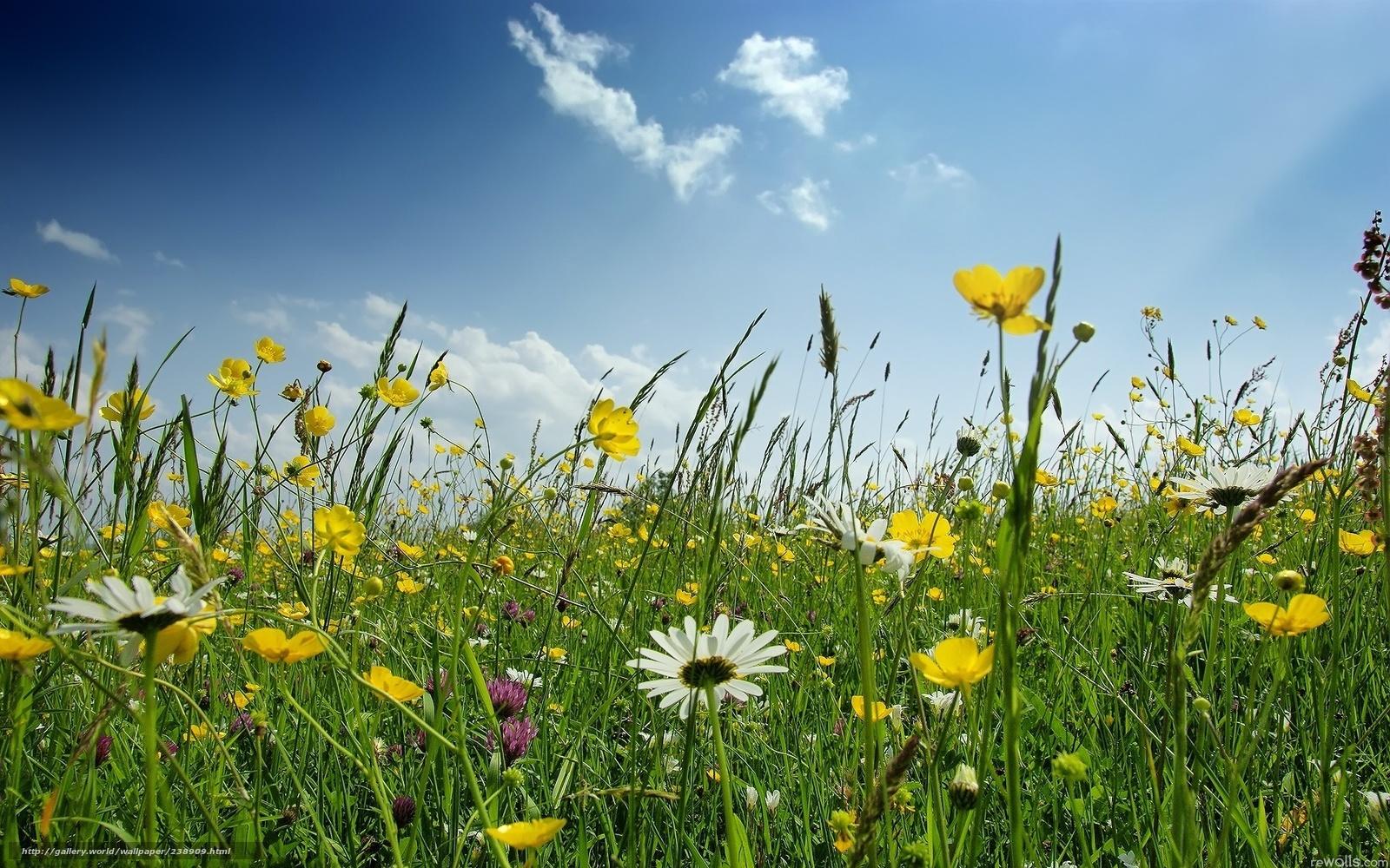 20 aprile e 11 maggio: parliamo di natura, farfalle, uccelli e biodiversità
