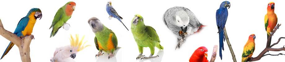 L'intelligenza a colori: conosciamo i pappagalli