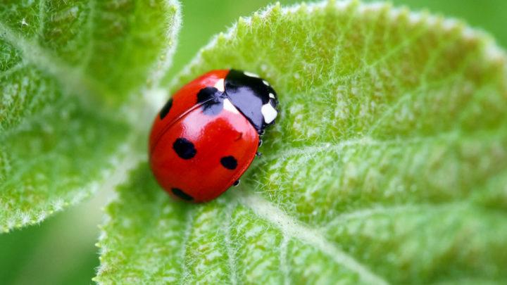 15 marzo   Insetti benefici per giardini e orti: non tutti sanno che…