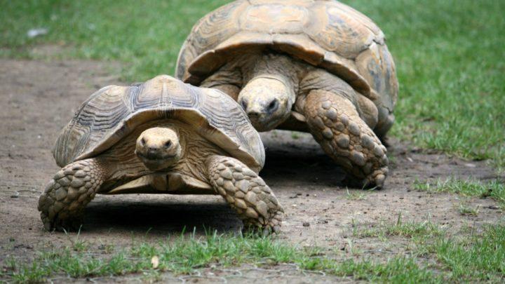 12 apr | Di terra e di acqua: i mondi delle tartarughe