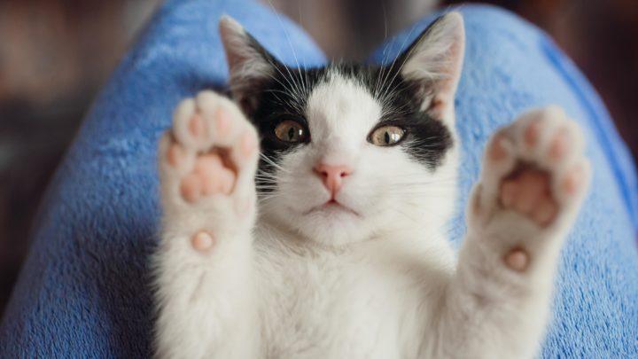 25/10: Felinamente, seminario gratuito sul comportamento del gatto