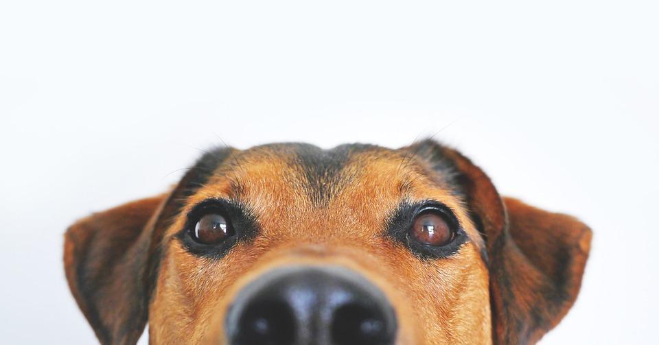 29 nov 2019 – Conosci il tuo cane? Seminario-conferenza sul comportamento canino